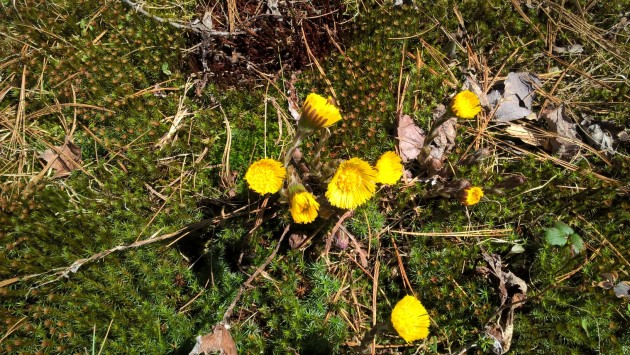 Wildflowers_2016